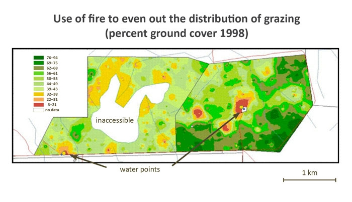 Figure showing the how fire can be used to even out the distribution of grazing.