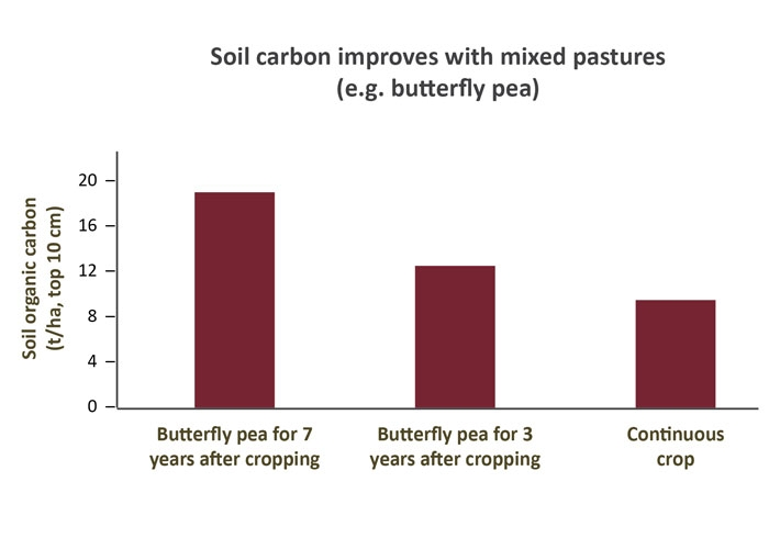A graph illustrating how soil carbon improved under mixed pastures.