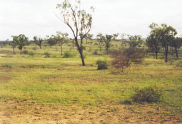 An example of land in poor condition.