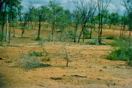 An example of land in very poor condition.