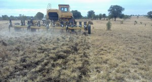Cultivating a rundown buffel pasture using a blade plough.