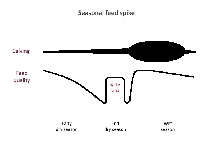 Line diagram illustrating the potential benefits of spike feeding at the end of the dry season in northern Australia.