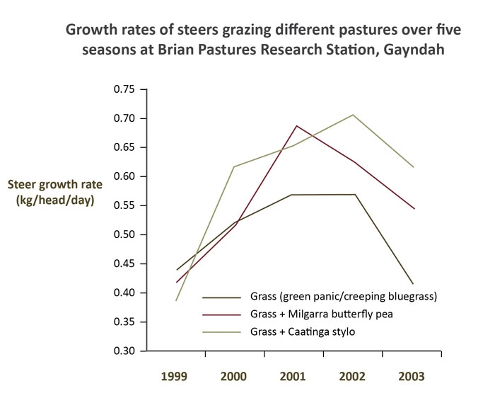 Graph showing growth rates (kg/head/day) of steers grazing grass, grass with Milgarra butterfly pea or grass with Caatinga stylo pasture over five seasons at Brian Pastures Research Station, Gayndah, Queensland.