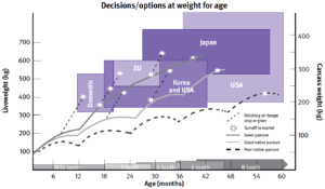 A graph with liveweight on y-axis, age on x-axis, and carcase weight on the other y-axis with major slaughter market requirements shaded and typical cattle growth pathways plotted across these.