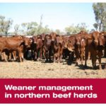 The front cover of the 'Weaner management in northern beef herds' manual