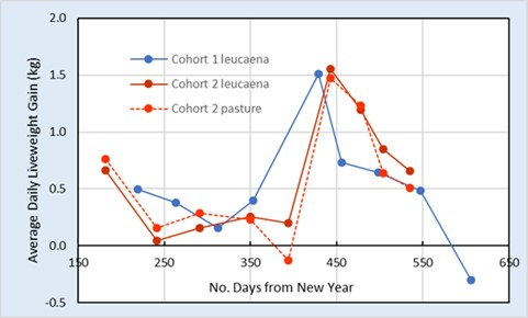 Comparison of average daily liveweight gain for 1st and 2nd Cohort steers grazing leucaena and improved pasture at Pinnarendi.
