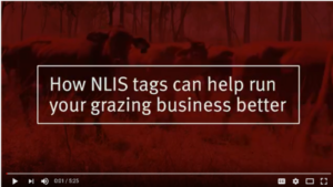 The new video produced by DAF beef extension officers captures how to make the most of the NLIS system for the benefit of informed decision making.