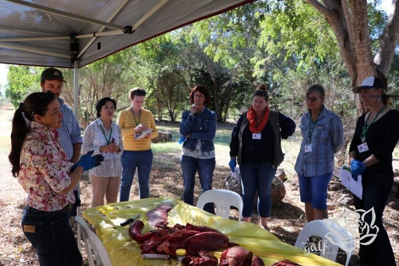 Women watch as a member of Biosecurity Queensland demonstrates what to organs to collect for a post mortem to be collected on a dead animal.