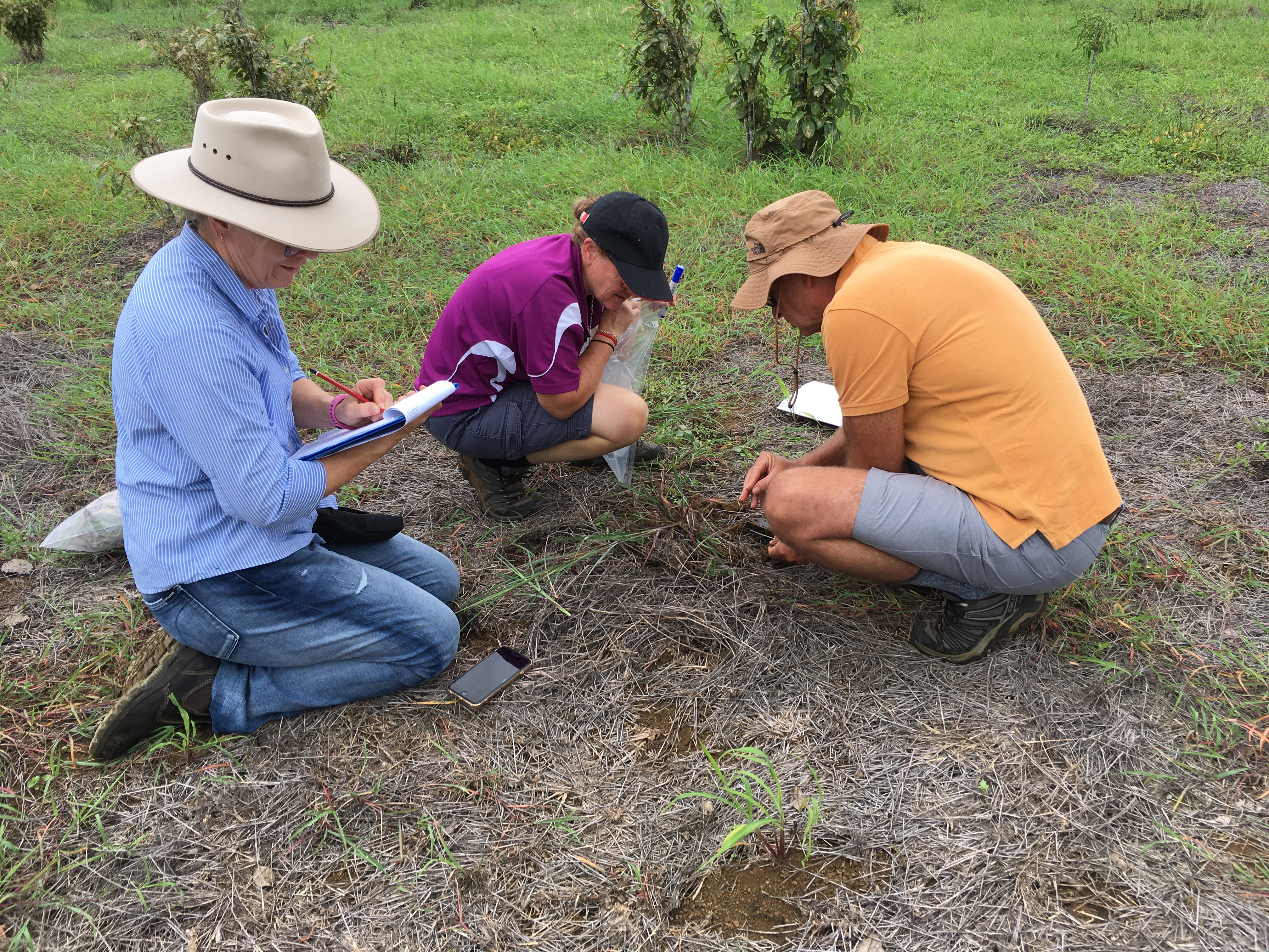 Three scientists sit in a field with some green grass and some dieback affected grass with clipboards.