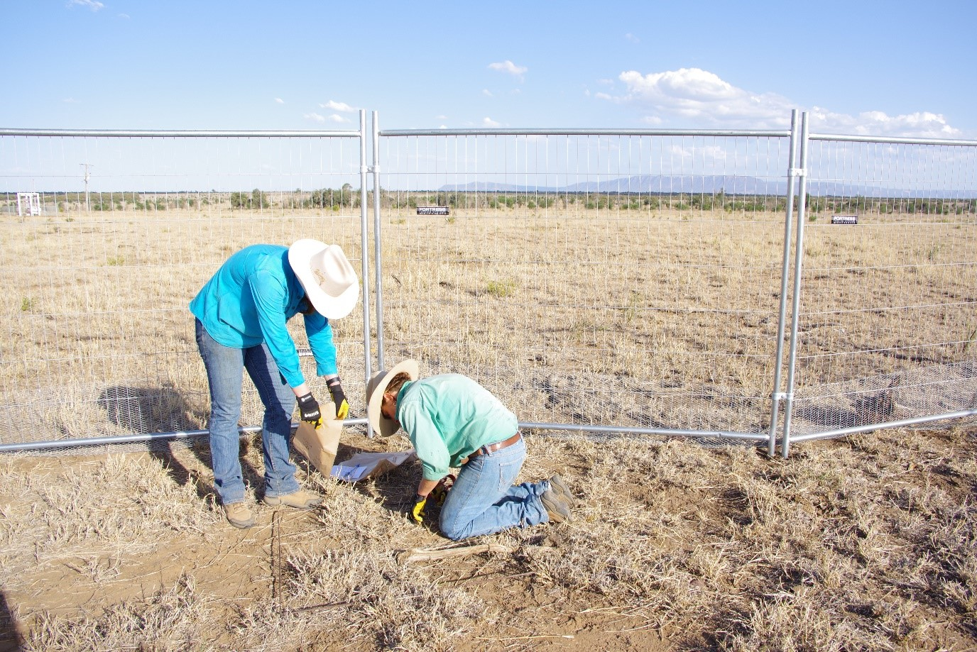 Two people in front of a six foot fence (SWIFTSYND site grazing exclusion fence) digging a hole and collecting the soil.