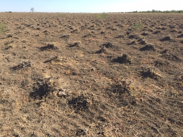 The brown earth is bare. Pedestals of pre-existing Mitchell grass tussocks are visible however tussocks are dead.