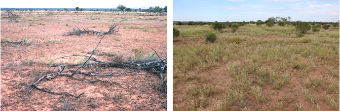 The photo taken in 1987 has very little ground cover (maximum 5%), whereas the photo taken in 2015 features approximately 50% ground cover.