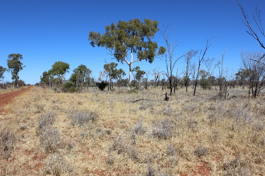 High density of perennial species on a red dirt landscape.