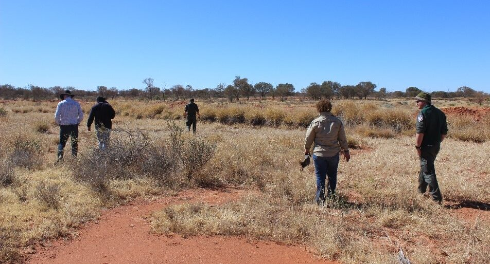 Mulga in view on the horizon.