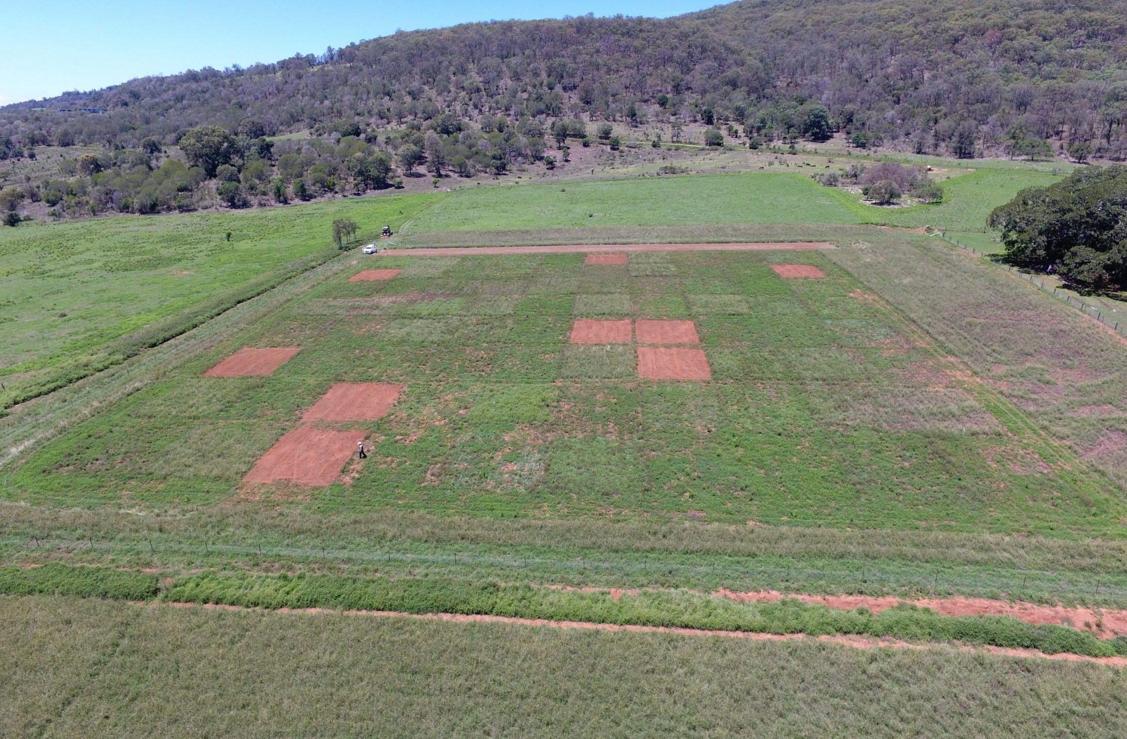 Research trial at Boonah