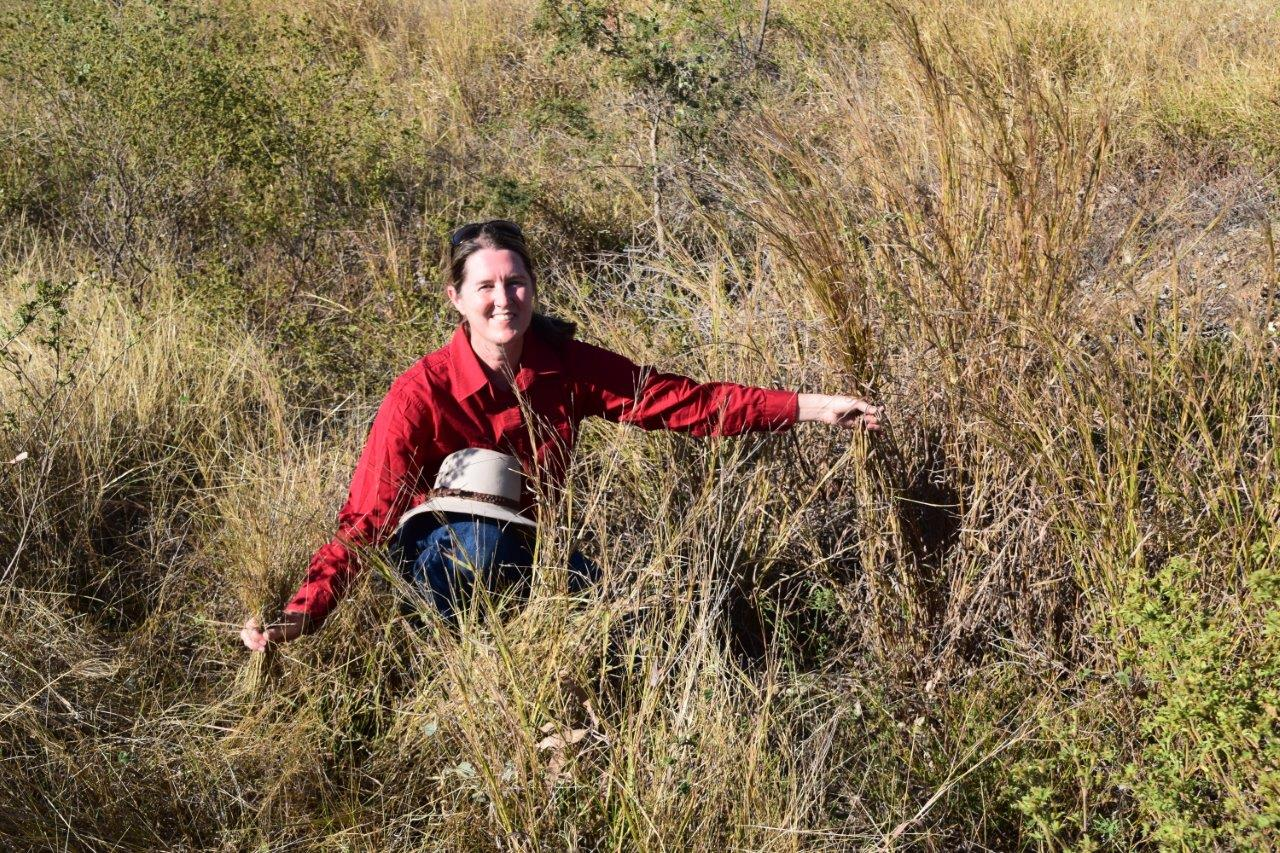 Project leader, Nicole Spiegel, amongst an Indian couch and black speargrass pasture.