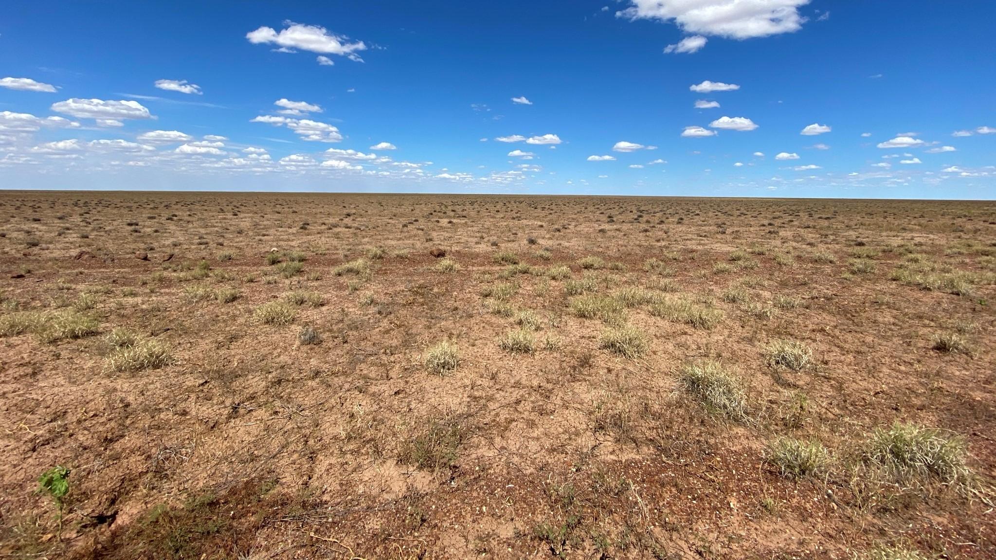Mitchell grass death